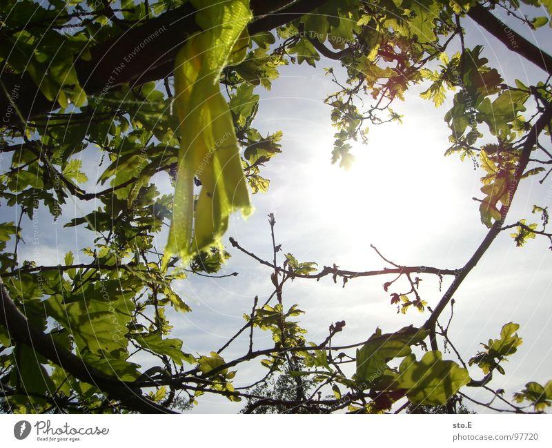 waypoint@expedition Menschenleer gelb Stoff gebunden wickeln Teile u. Stücke Baum Blatt blenden Wolken schlechtes Wetter Wiese Umgebung Osten Sicherheit Natur