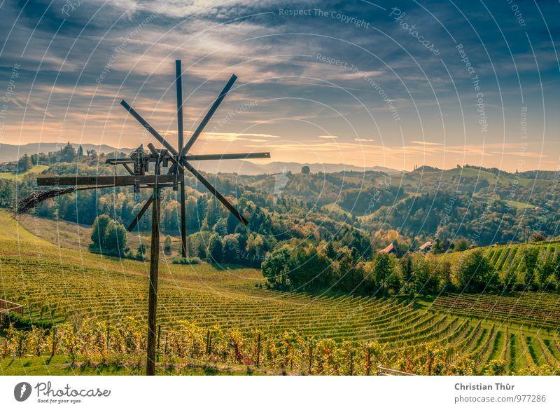 Weinernte Spätherbst Himmel Natur Ferien & Urlaub & Reisen Pflanze Sonne Baum Erholung Landschaft ruhig Wolken Wald Umwelt Herbst Wiese Freiheit außergewöhnlich