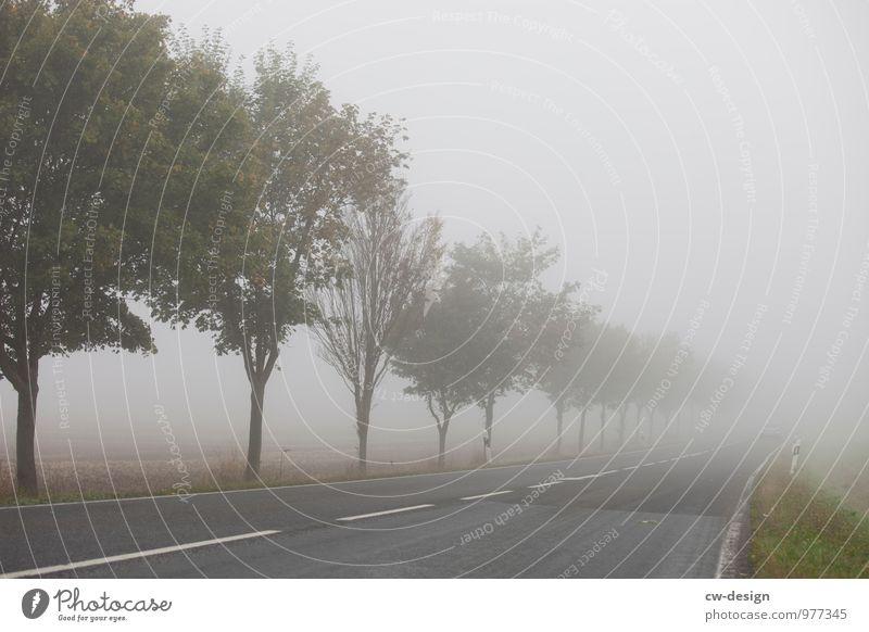 Nebelschwadenbild Umwelt Natur Landschaft Herbst Klima schlechtes Wetter Baum Feld Verkehrswege Straßenverkehr Autofahren Wege & Pfade Wegkreuzung träumen