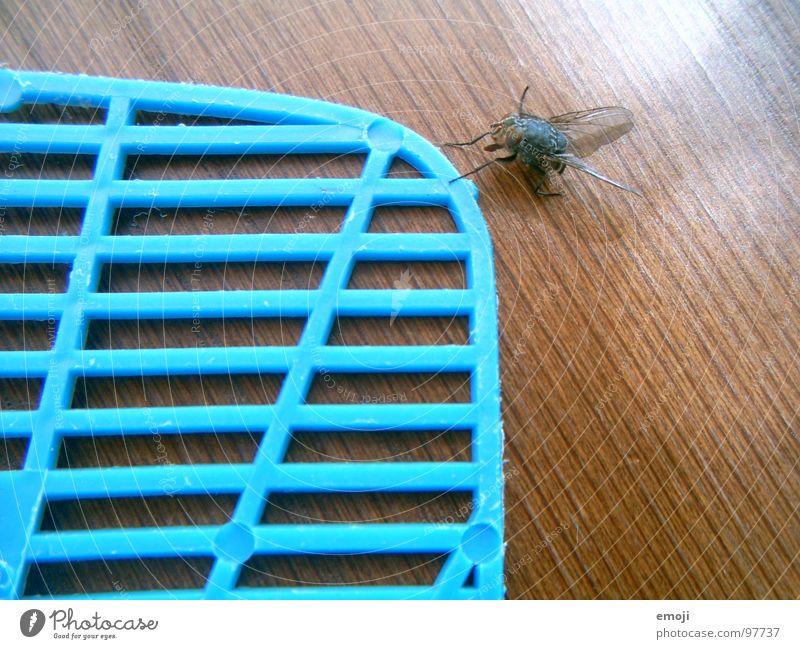 kommt eine Fliege daher gewatschelt Chance Überleben Leben live lustig Raster Kontrolle fly Tod dead funny Freude klatsche fliegenklatsche Vorsicht blau blue