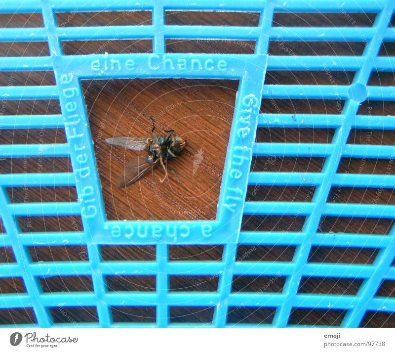 überlebt!! oder etwa doch nich?? blau Freude Leben Spielen Tod lustig Fliege Theaterschauspiel Zettel Raster live Täuschung Überleben Chance Scheintod