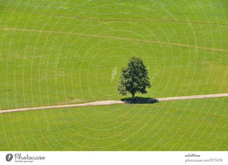 Einzelkämpfer Umwelt Natur Landschaft Sommer Klima Schönes Wetter Pflanze Baum Wiese Feld grün einzeln einzigartig Einsamkeit Wege & Pfade Baumschatten Schatten