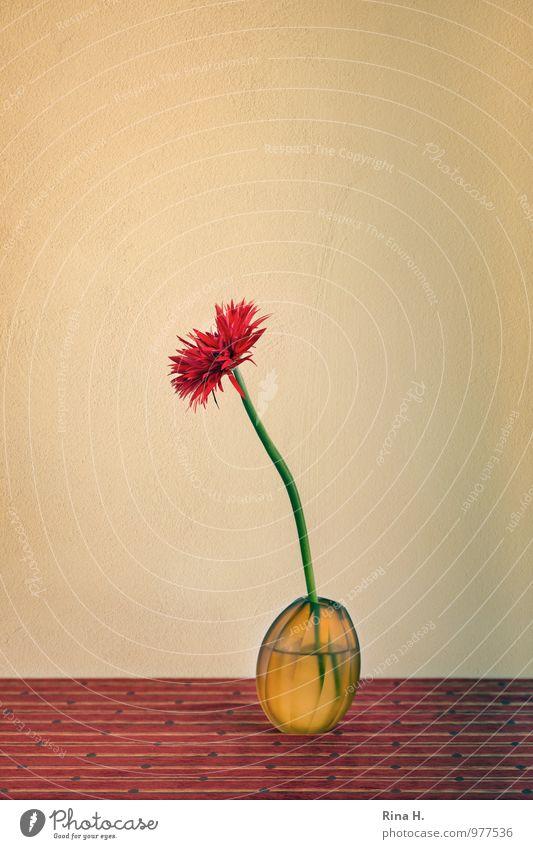 PuschelGerbera Blume Innenarchitektur Lifestyle Dekoration & Verzierung ästhetisch Neigung Stillleben Tischwäsche