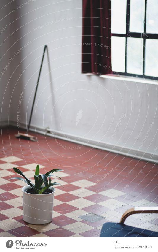 samstag ist putztag Pflanze Fenster Wand Innenarchitektur Mauer Wohnung Raum Häusliches Leben Dekoration & Verzierung Sauberkeit Reinigen Stuhl