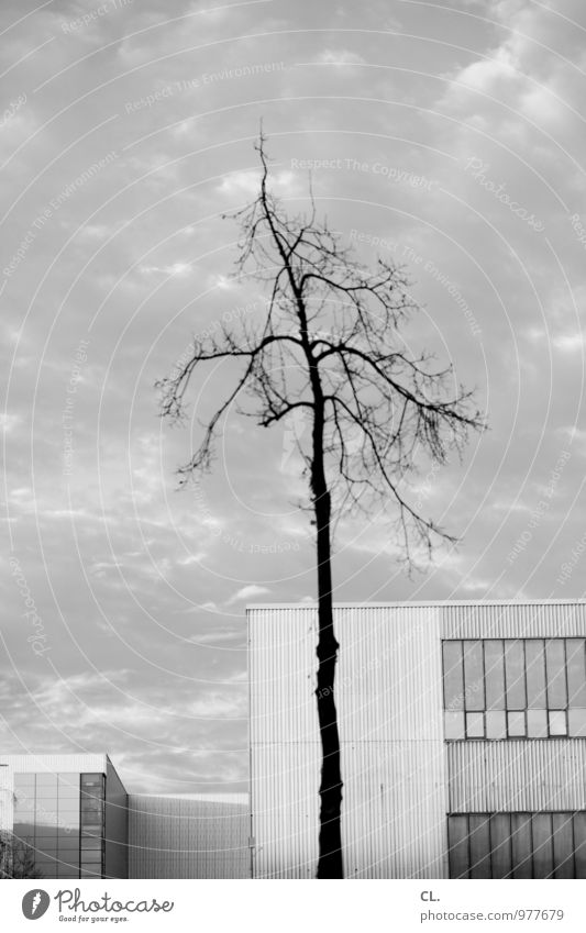 karg Umwelt Natur Himmel Wolken Herbst Winter Klima Wetter schlechtes Wetter Wind Baum Ast Stadt Menschenleer Haus Industrieanlage Fabrik Gebäude Architektur