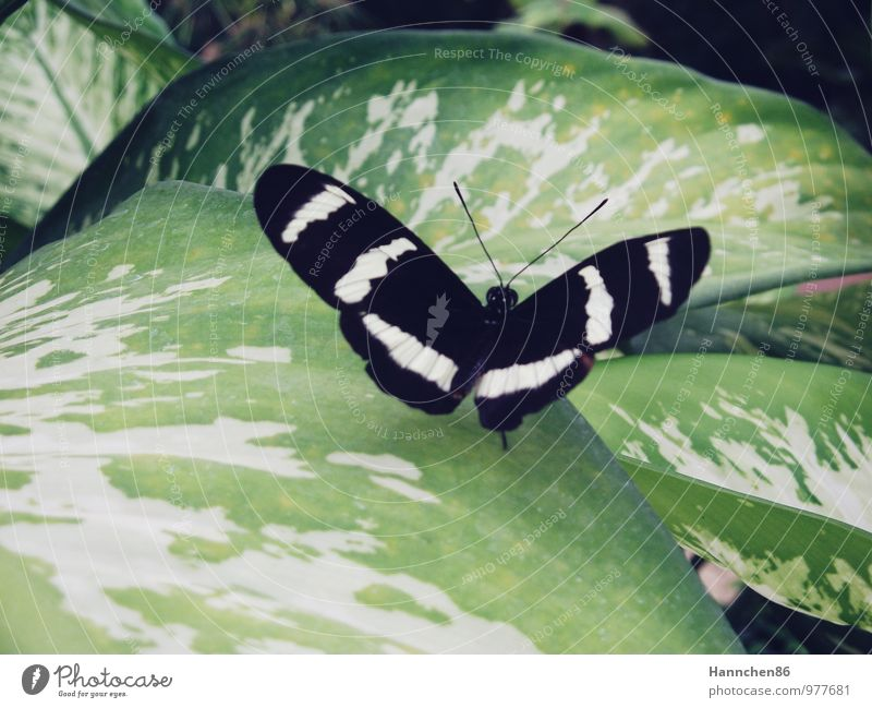 Anpassung Natur Pflanze grün Sommer Erholung Blatt Tier schwarz Umwelt Traurigkeit Gefühle Glück fliegen Stimmung Fröhlichkeit Flügel
