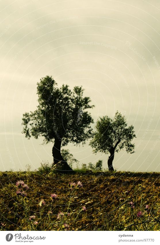 Twins Himmel Natur grün schön Baum Ferien & Urlaub & Reisen Pflanze Sommer Einsamkeit Landschaft Leben Wiese Ausflug außergewöhnlich Tourismus Wandel & Veränderung