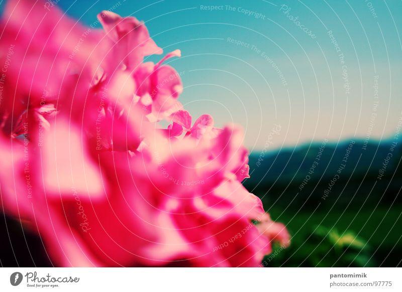 Distance rosa springen Nahaufnahme Himmel schön Flowers Landscape Blured Hills Sky