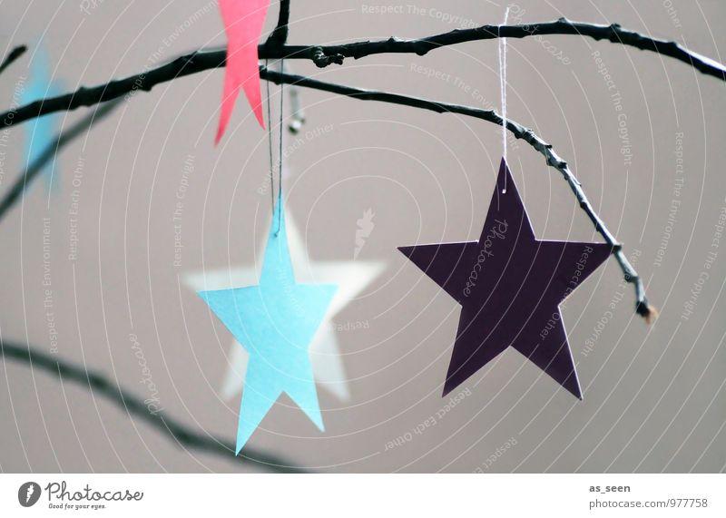 Weihnachtssterne Lifestyle elegant Stil Design harmonisch ruhig Meditation Wohnung Weihnachten & Advent Winter Zweige u. Äste Ast Dekoration & Verzierung