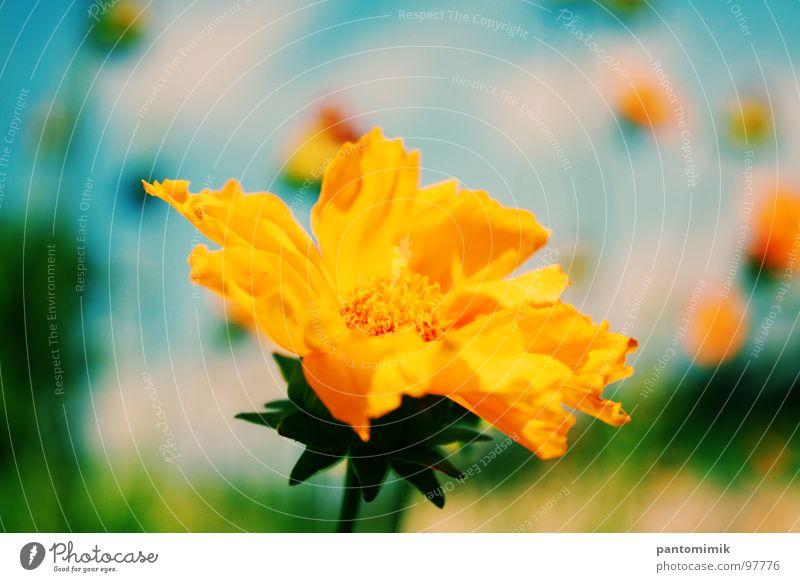 Flower gelb