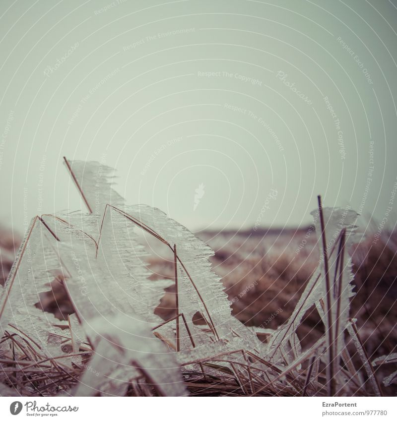 Eis am Stiel Ferien & Urlaub & Reisen Tourismus Ausflug Umwelt Natur Landschaft Pflanze Himmel Herbst Winter Klima Wetter Frost Gras Wiese Feld frieren dunkel