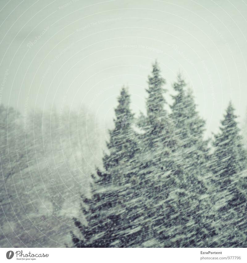Schneeflöckchen... Himmel Natur Ferien & Urlaub & Reisen weiß Baum Landschaft Winter schwarz dunkel Wald kalt Umwelt grau Schneefall Wetter