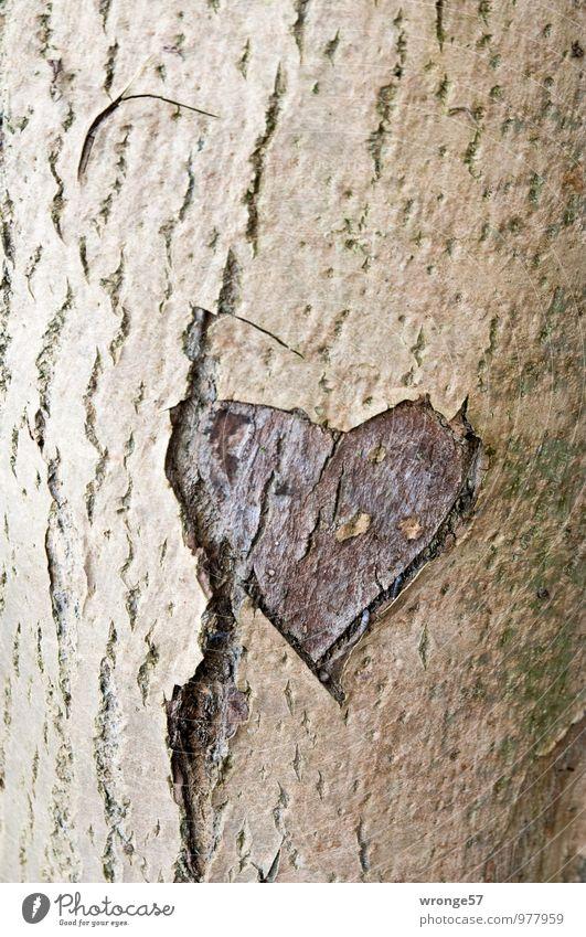 Alte Liebe Baum Laubbaum Holz Zeichen Herz braun Verliebtheit Treue Romantik herzförmig Baumstamm Baumrinde Ritzung Erinnerung Farbfoto Gedeckte Farben