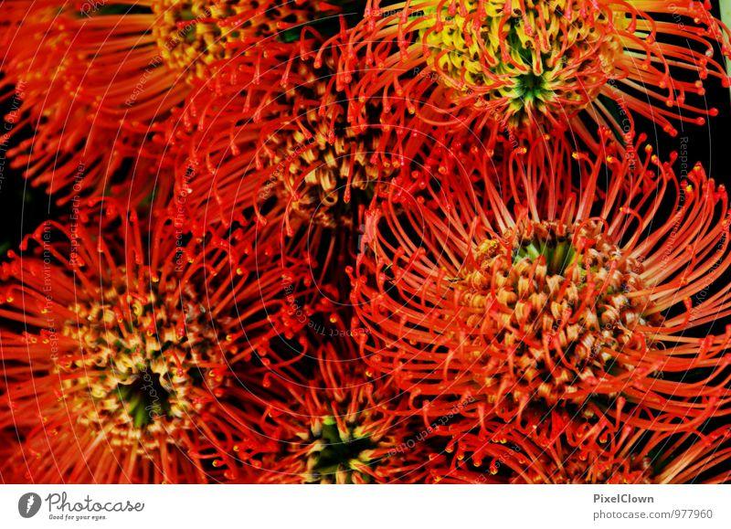 Blumen Natur Ferien & Urlaub & Reisen Pflanze schön Sommer rot Gefühle Liebe Blüte Stil Glück außergewöhnlich träumen ästhetisch Blühend