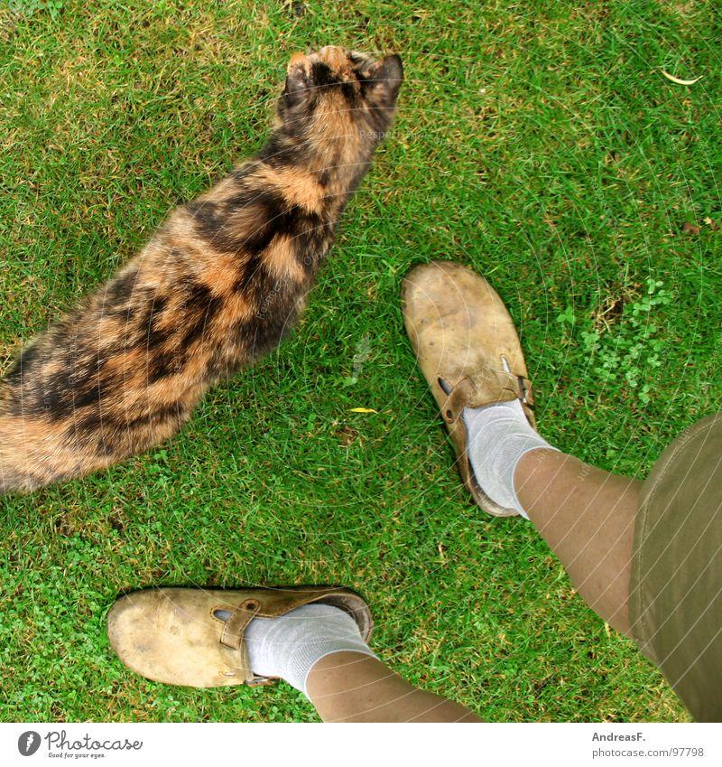 der kleingärtner Katze Haustier Hauskatze Gras Wiese grün Shorts Strümpfe Gärtner Schrebergarten Erholung Freizeit & Hobby Ferien & Urlaub & Reisen Sonntag