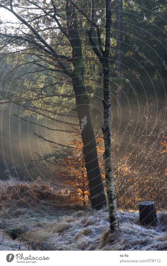 Winterwald Umwelt Natur Landschaft Tier Sonnenlicht Nebel Pflanze Baum Sträucher Wildpflanze Wald wandern Romantik Einsamkeit Erholung Stimmung