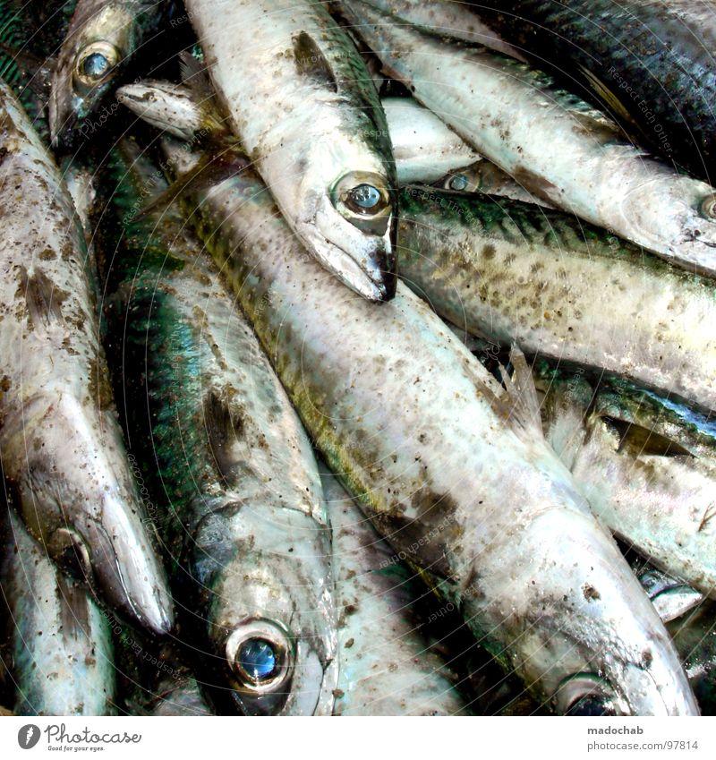 FING-FONG Natur Meer Tier Umwelt Auge Tod Sand liegen Lebensmittel dreckig frisch Ernährung Fisch Kochen & Garen & Backen Müll Gastronomie