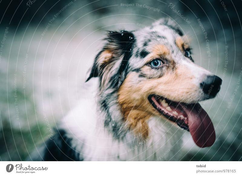 Auf den Hund gekommen Pt.2 blau schön weiß Tier schwarz Auge Glück braun Zufriedenheit Lächeln beobachten weich Freundlichkeit Ohr Fell