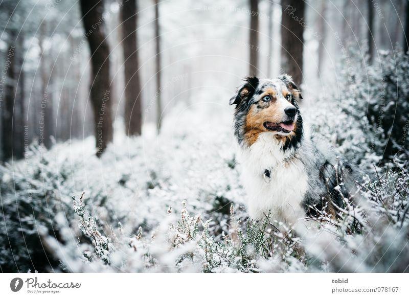 Auf den Hund gekommen Pt.3 Hund Natur blau Pflanze weiß Baum Landschaft Tier schwarz Wald kalt Schnee natürlich braun Eis Idylle