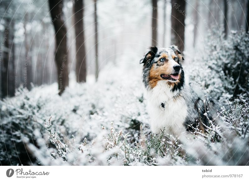 Auf den Hund gekommen Pt.3 Natur Landschaft Pflanze Eis Frost Schnee Baum Sträucher Wald Tier Haustier Tiergesicht Fell 1 beobachten sitzen kalt kuschlig