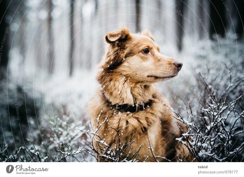 Auf den Hund gekommen Pt.1 Natur Landschaft Winter Schnee Baum Sträucher Wald Tier Haustier Tiergesicht Fell beobachten sitzen kuschlig weich braun gelb grau