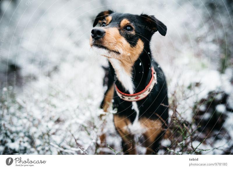 Auf den Hund gekommen Pt.5 Natur schön weiß Tier schwarz Wald Auge Gras Schnee grau klein braun Wetter Sträucher stehen