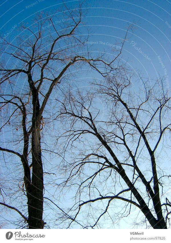 Spinnennetzbäume Natur Himmel Baum blau Landschaft 2 Frieden Ast geheimnisvoll Schönes Wetter friedlich beeindruckend