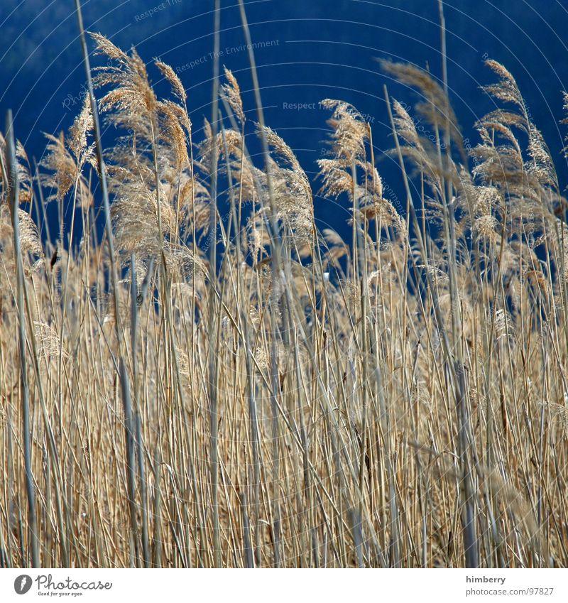 whispering wind Feld Landwirtschaft Herbst Himmel Korn Getreide Natur Versteck Landschaft Pflanze