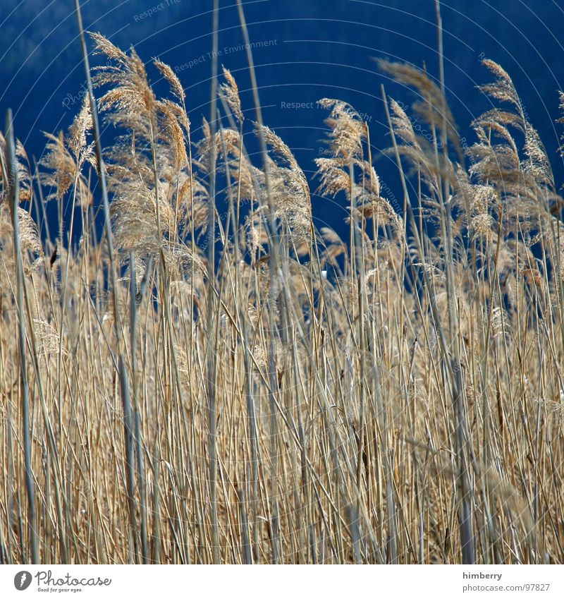 whispering wind Natur Himmel Pflanze Herbst Landschaft Feld Getreide Landwirtschaft Korn Versteck