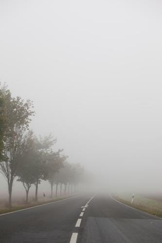 Herbststimmung Natur Sommer Stadt grün Baum Landschaft Wolken dunkel Straße Umwelt kalt Traurigkeit Frühling Wiese Wege & Pfade