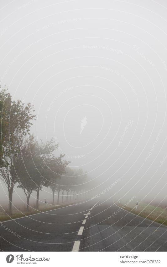 Herbststimmung Umwelt Natur Landschaft Luft Wolken Frühling Sommer schlechtes Wetter Nebel Baum Wiese Feld Hügel Dorf Kleinstadt Stadt Stadtrand Menschenleer