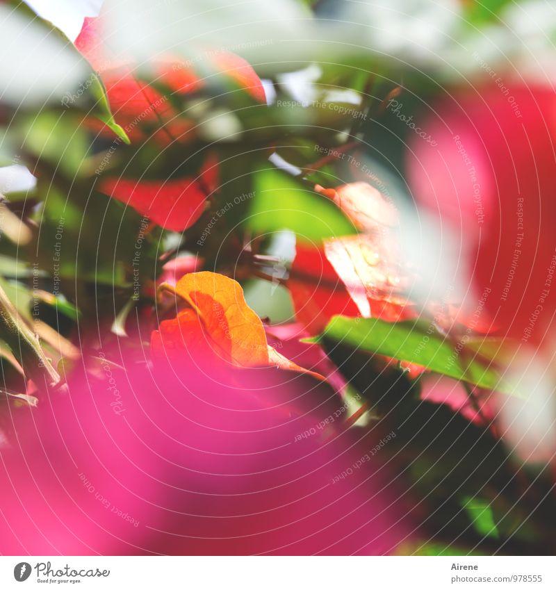 Farbpalette Pflanze grün rot Blume Blatt Blüte rosa orange Wachstum Fröhlichkeit Lebensfreude Kraft Blühend Kitsch exotisch Klischee