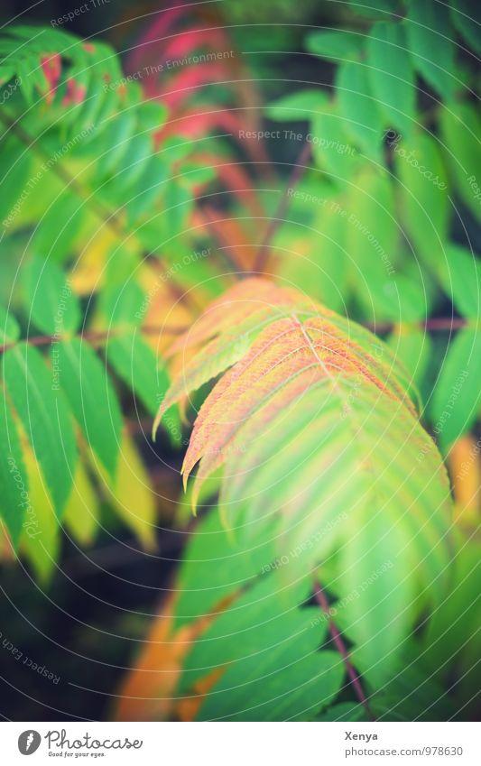 Dschungel Umwelt Natur Pflanze Farn Blatt Grünpflanze grün Menschenleer Tag Schwache Tiefenschärfe