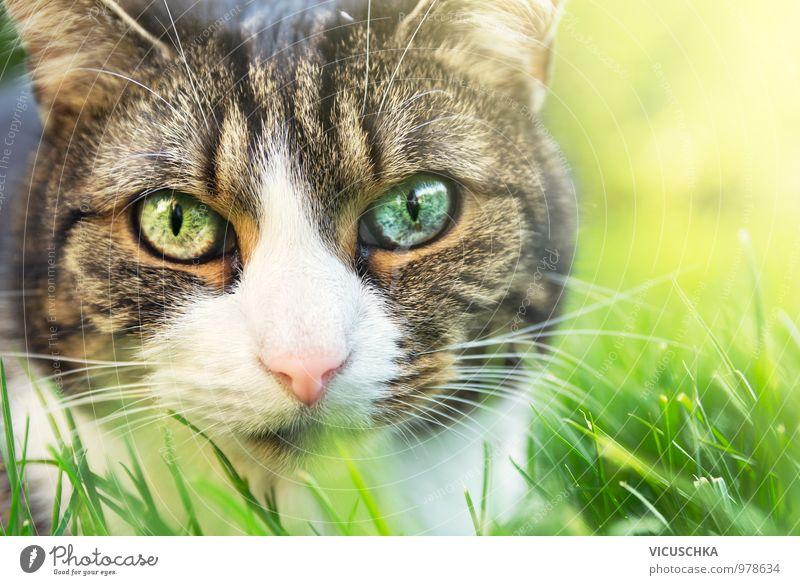 Katze Portrait mit verschiedenen farbigen Augen Natur schön Sommer Tier Gesicht Gras Frühling Stil Garten rosa Park Lifestyle frei niedlich