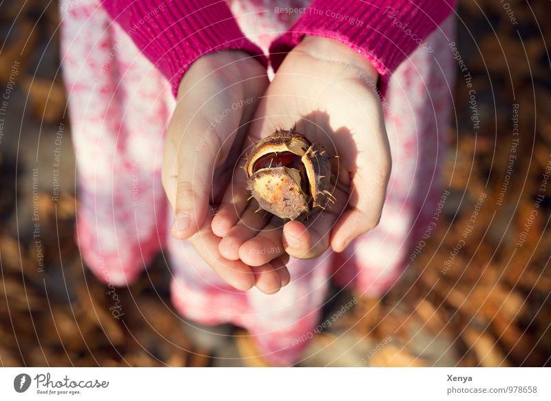 Herbstlaune Kind Hand 1 Mensch 8-13 Jahre Kindheit Kastanie Park braun rosa Geschenk Herbstlaub herbstlich Sonnenlicht Spaziergang Warmes Licht Geborgenheit
