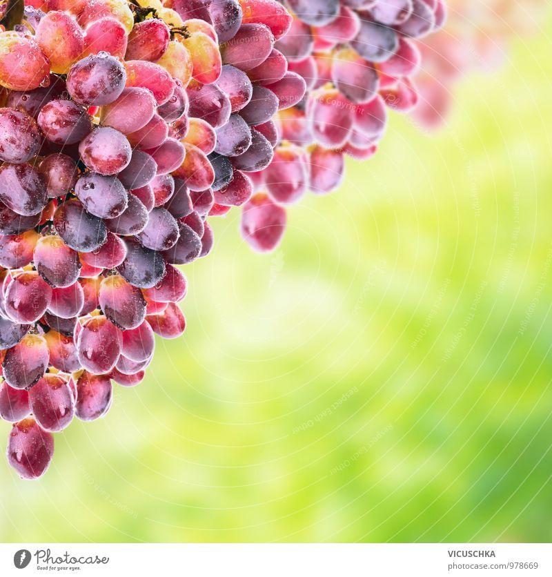 Rose Wein Trauben auf sonnigen Laub Lebensmittel Frucht Ernährung Bioprodukte Vegetarische Ernährung Diät Lifestyle Design Garten Natur Pflanze Sonne