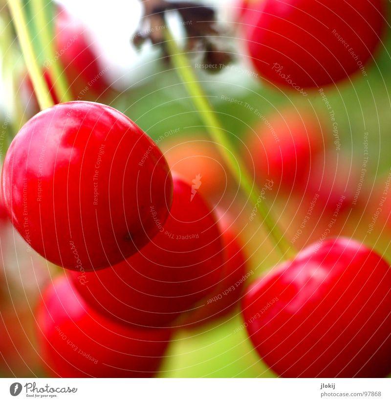 Dessert Natur rot Ernährung Frucht süß Stengel lecker reif Gesunde Ernährung hängen Kirsche fruchtig Vegetarische Ernährung Vegane Ernährung