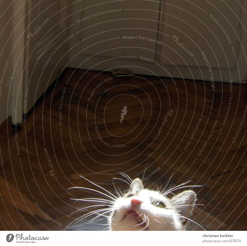 roxy rockt Freude Tier Katze Konzentration Jagd Säugetier Haustier