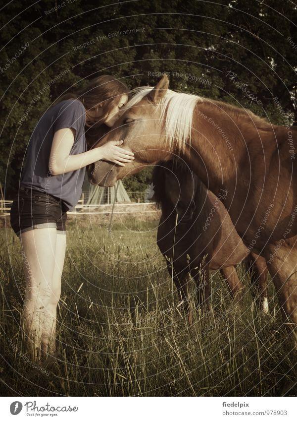 Pferdemädchen Kind Jugendliche schön Sommer Sonne Junge Frau Freude Mädchen 18-30 Jahre Erwachsene Gefühle Gras Liebe Sport Glück Haare & Frisuren