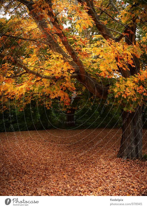 Magisches Herbstlicht Natur Ferien & Urlaub & Reisen alt Farbe Sonne Baum Einsamkeit rot Blatt gelb Traurigkeit Senior orange Vergänglichkeit Trauer
