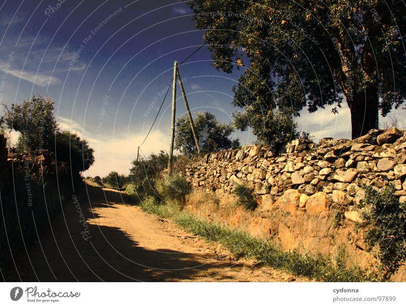 Utopian Dream Himmel Natur grün schön Baum Ferien & Urlaub & Reisen Pflanze Sonne Sommer Einsamkeit Straße Landschaft Leben Wiese Mauer träumen