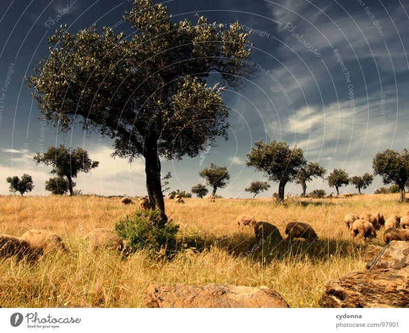 Utopian Dream I Mensch Himmel Natur Ferien & Urlaub & Reisen grün schön Baum Pflanze Sonne Sommer Tier Einsamkeit Landschaft Wiese Leben Mauer