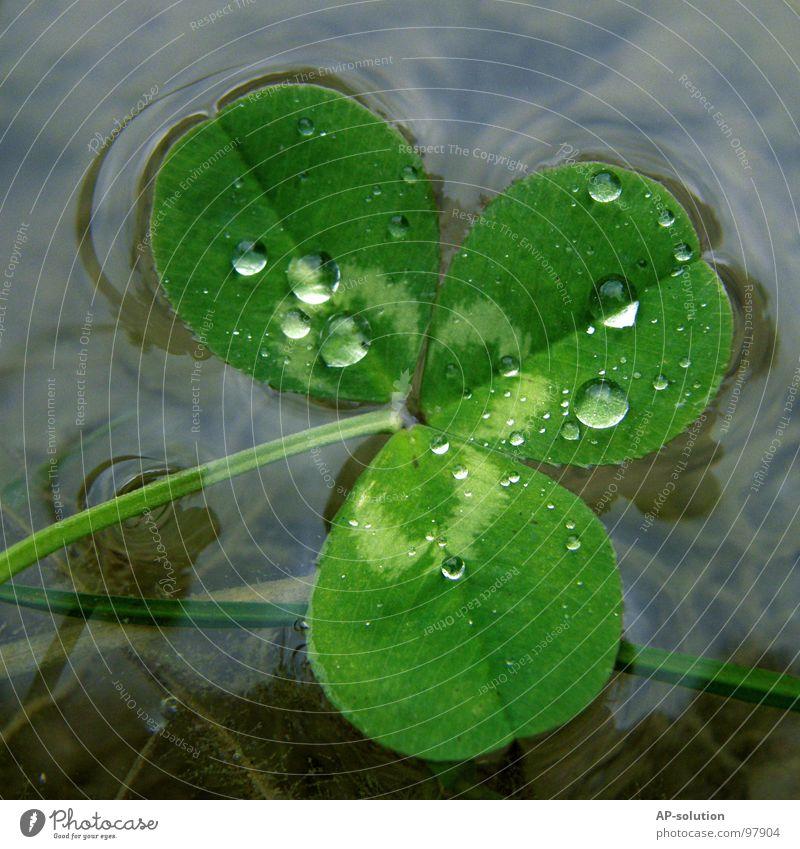 Klee im See Natur grün Wasser Wolken ruhig Glück Regen glänzend frisch Erfolg Wassertropfen nass rund Urelemente Klarheit nah