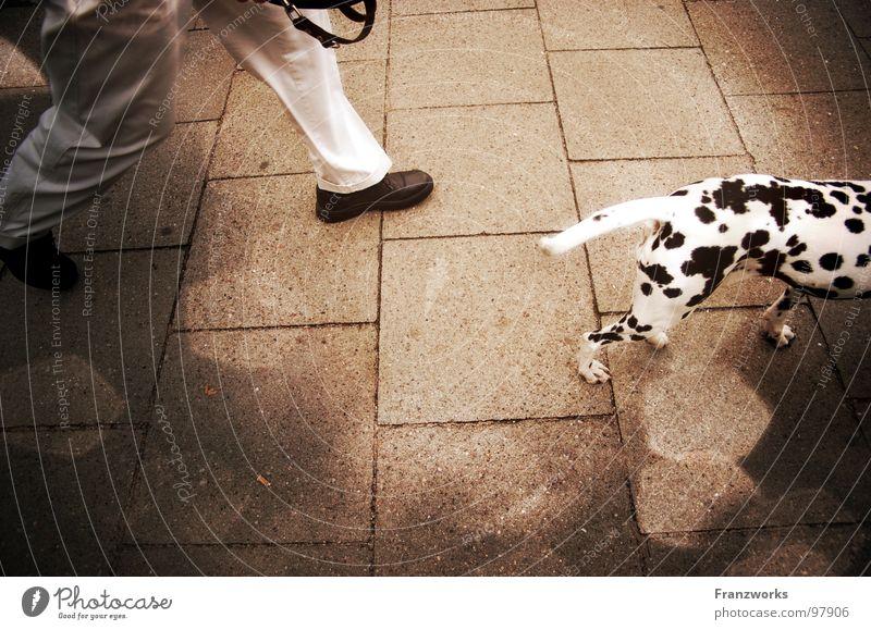 Dalma-Diener... Tier Straße Hund Wege & Pfade Beine gehen laufen Seil rennen Spaziergang Freizeit & Hobby Punkt führen Kopfsteinpflaster Fleck