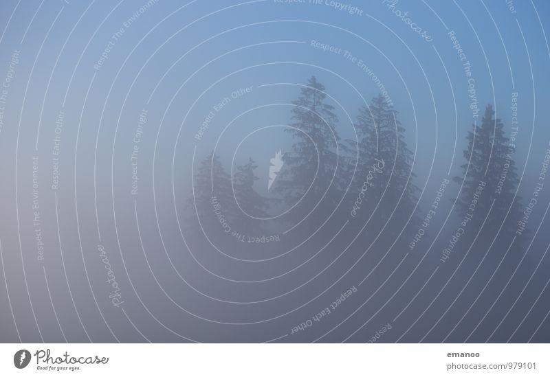 Nebelwald Berge u. Gebirge wandern Umwelt Natur Landschaft Pflanze Luft Wasser Himmel Wolken Herbst Klima Wetter schlechtes Wetter Baum Wald Wachstum blau grau