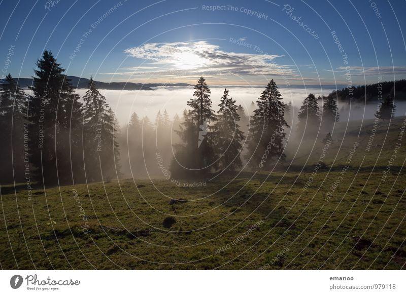 Schwarzwaldnebel Ferien & Urlaub & Reisen Tourismus Ferne Freiheit Berge u. Gebirge Natur Landschaft Luft Himmel Horizont Sonne Herbst Klima Wetter Nebel Baum