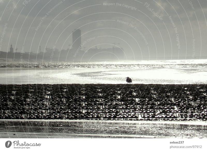 Belgien´s Küste Vogel Ebbe Meer Strand Europa Einsamkeit ruhig Schwarzweißfoto Möve Flut Skyline Regen Wasser Nordsee Sonne reflektion Freiheit
