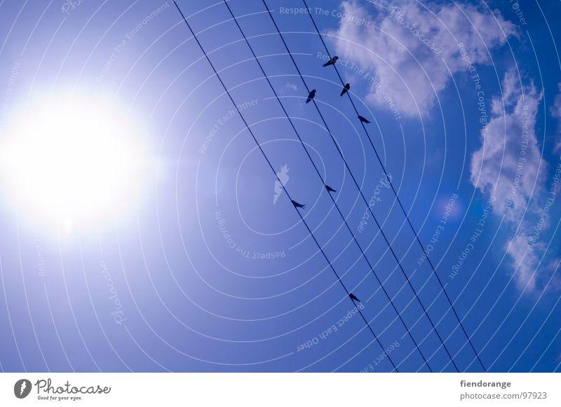 vögeln auf der leine Himmel Sonne Wolken Wärme hell Vogel Seil Elektrizität Physik heiß Langeweile Wissenschaften Schwalben