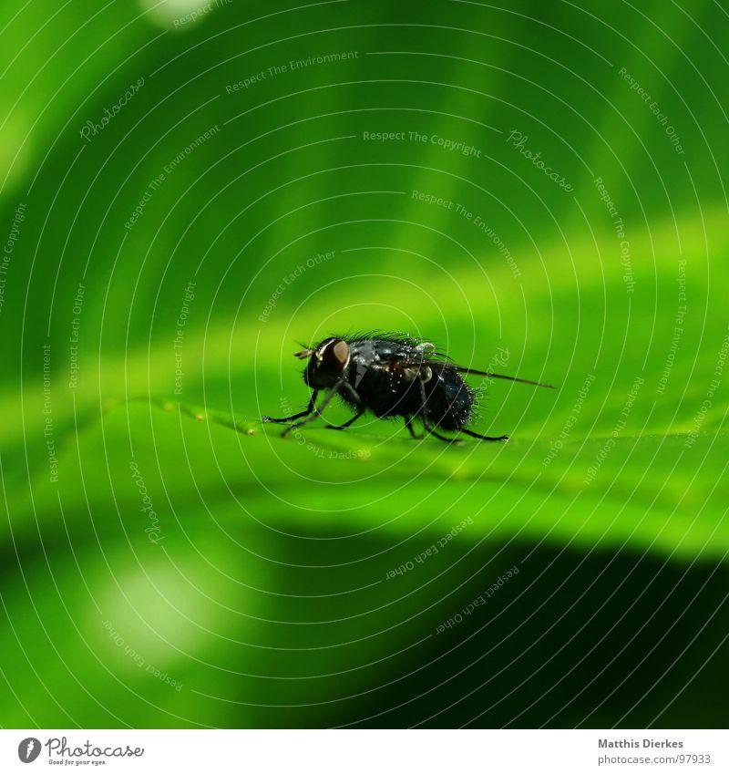 MITTAGSPAUSE Natur grün Sommer Tier Blatt Leben klein Garten Beine fliegen sitzen warten Fliege Beginn stehen Flügel