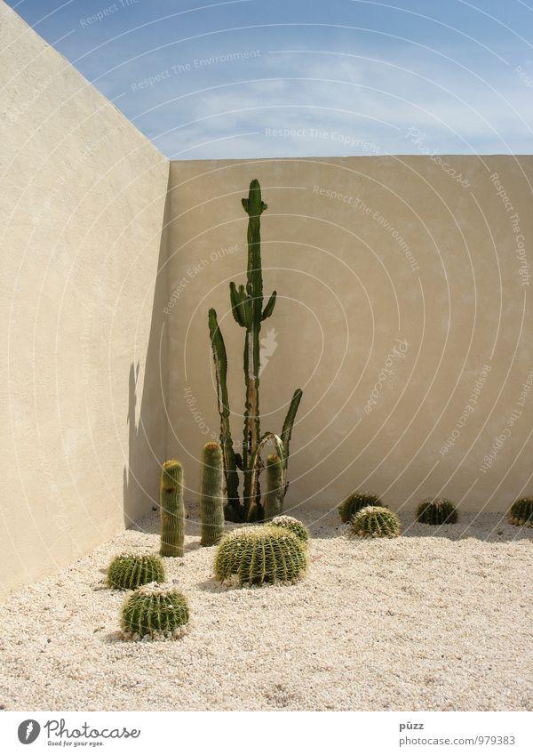 Cactus Corner Ferien & Urlaub & Reisen Sommer Garten Natur Pflanze Sand Schönes Wetter Kaktus Grünpflanze exotisch Stein ästhetisch heiß stachelig blau gelb